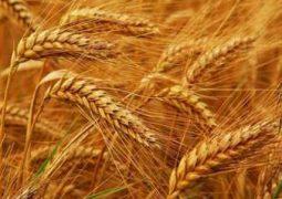 گزارش تحلیلی صادرات کالاهای غیرنفتی کشور طی دوازده ماهه سال ۱۳۹۵ ( گروه کشاورزی)