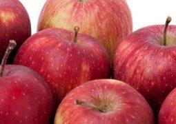 رفع موانع صادرات سیب ایران به کشور عراق/ کیفیت تولید سیب در ایران با تکنیک های روز دنیا مطابقت دارد