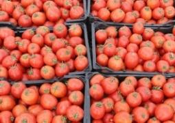 صادرات گوجه فرنگی از مرز پرویزخان ممنوع شد